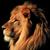 lion-50-px