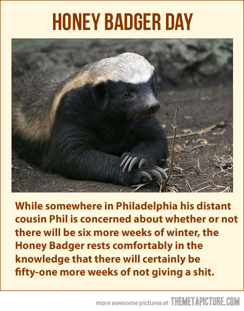 funny-honey-badger-dont-care-give-a-damn
