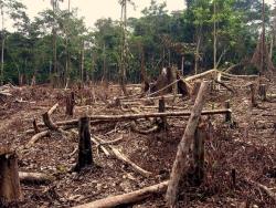 deforestation_in_the_amazon.jpg.662x0_q100_crop-scale