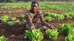 senegal-farming