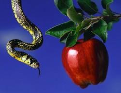 snake-apple-original-sin